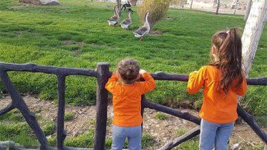 باغ پرندگان صفادشت