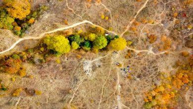 جنگلهای بلوط