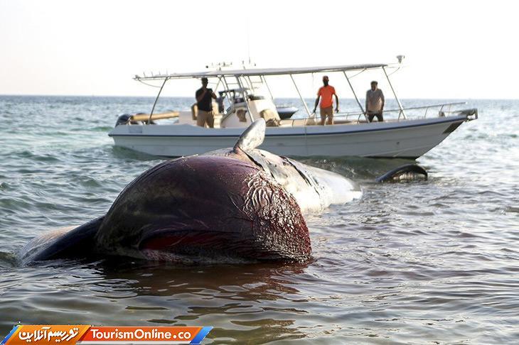 علت مرگ نهنگ کیش