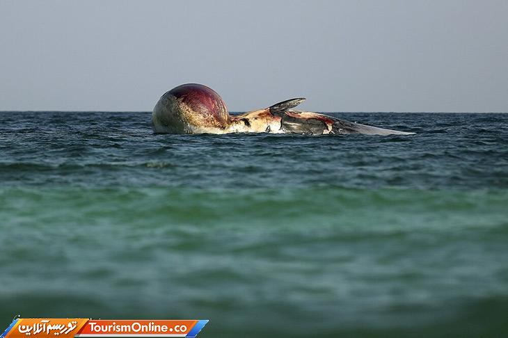 خودکشی نهنگ