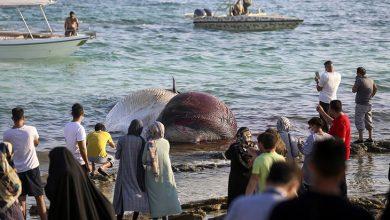 نهنگ کیش