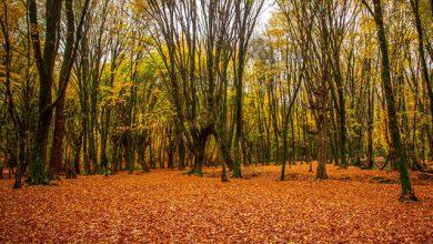 پاییز جنگل های شمال