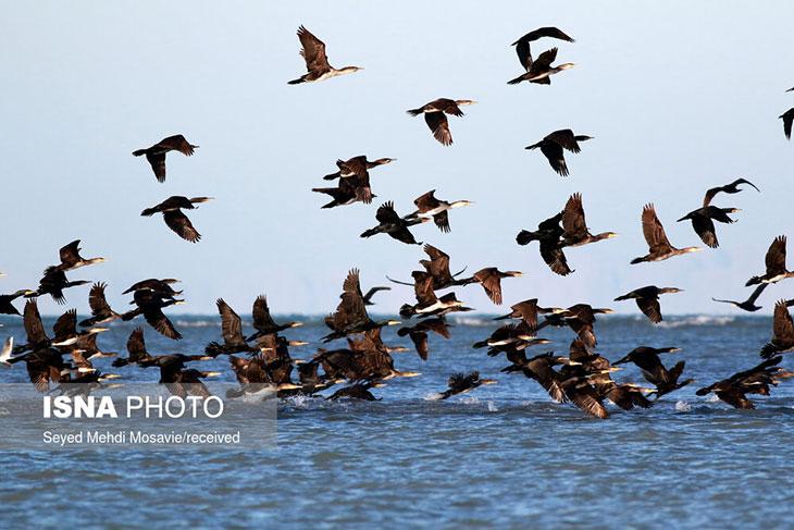 پرندگان مهاجر هرمزگان