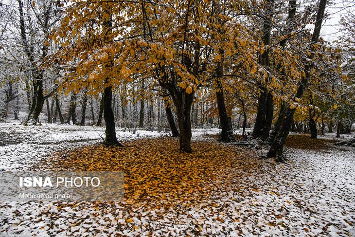 زمستان آمد