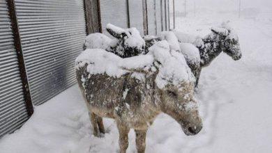 یخ زدگی حیوانات
