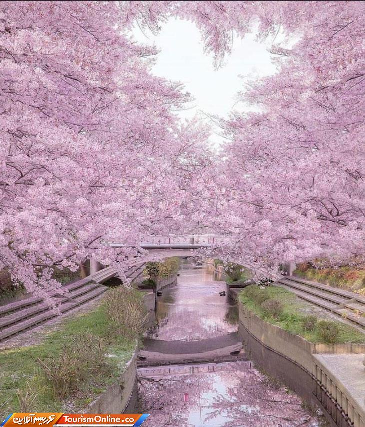 طبیعت صورتی ژاپن