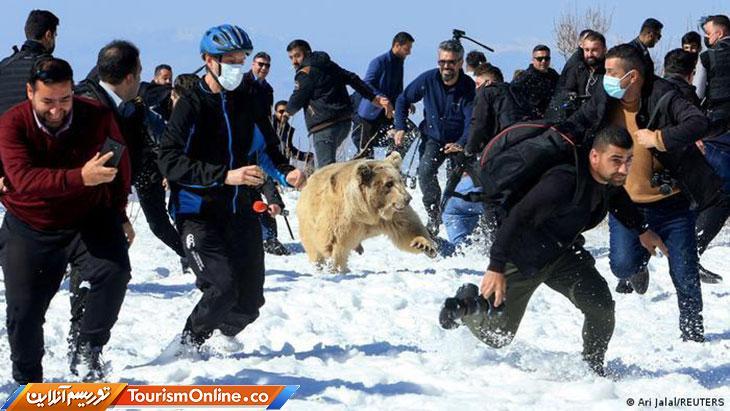 شوق رهایی یک خرس