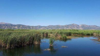 نیزارهای دریاچه مریوان