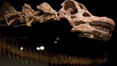 کشف بقایای دایناسور