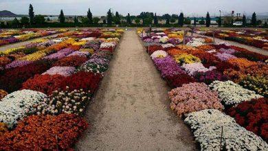 زیبایی های هلند در محلات ایران