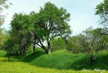 باغات قزوین